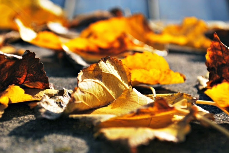 blog_geneatheme-novembre_autumn-blur-ground-884