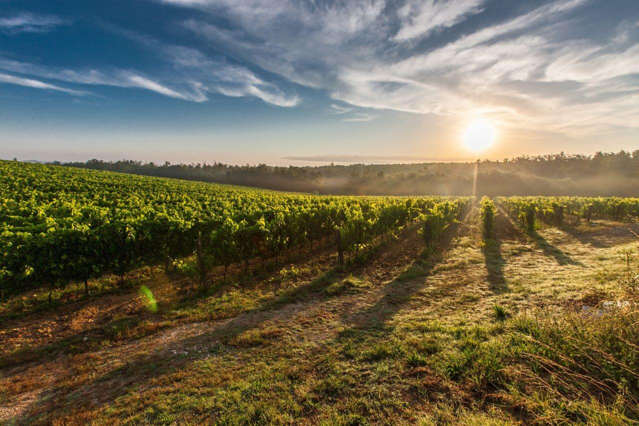 Mort dans les vignes : quand la généalogie prend vie