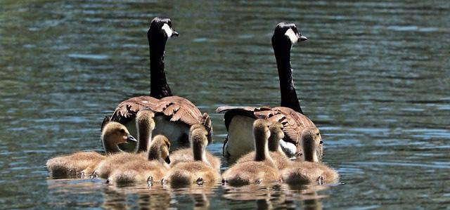 Geneathemes : autour de la famille et des combattants